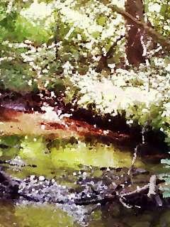 belden meadow with stream