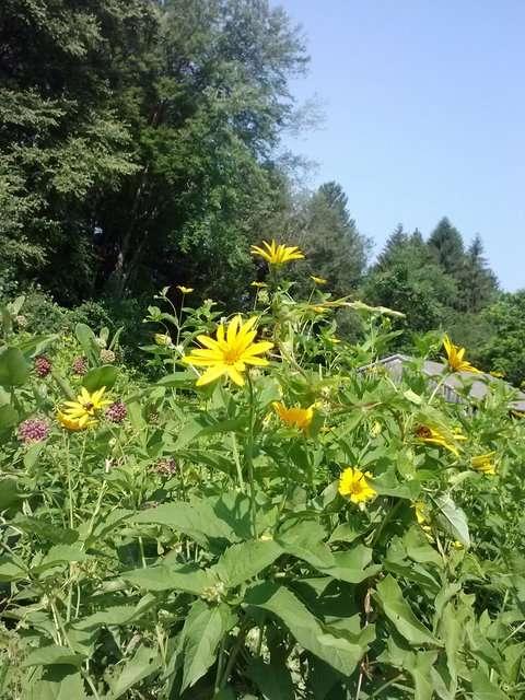 rsz_1rsz_belden_meadow_artichokes